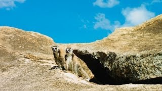 Island of Lemurs: Madagascar - Official Trailer [HD]
