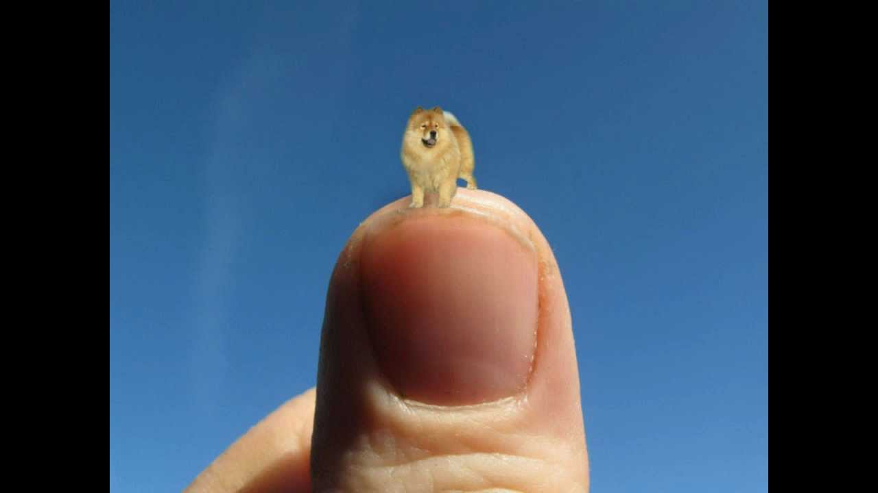 Smallest duck in the world