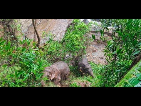 THAILAND: Sechs Elefanten stürzen Wasserfall herunter und ertrinken