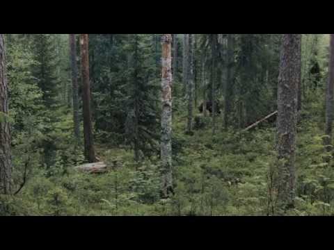 Россия. Природа и животный мир/Russia Nature and wildlife/ENG SUB