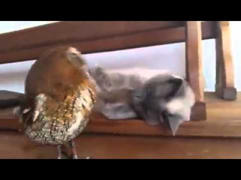Cat plays with his friend