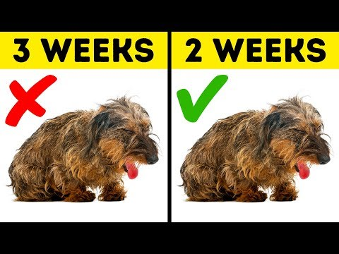 10 Warning Signs Your Pet Needs Help Right Now