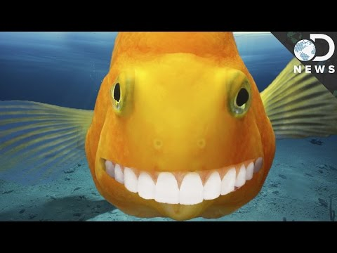 How Human Teeth Evolved From Ancient Fish