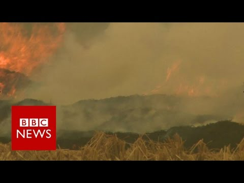 Delhi smog: Crop-burning adds to pollution - BBC News