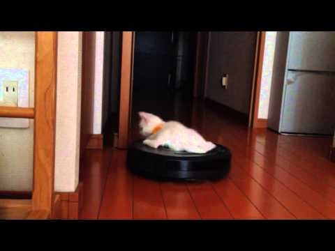 子猫「新しい乗り物を見つ...