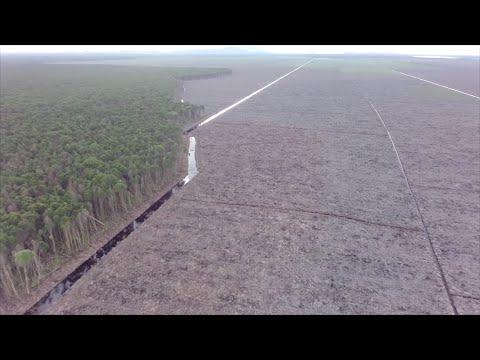 Credit Suisse finanziert Regenwald-Zerstörung
