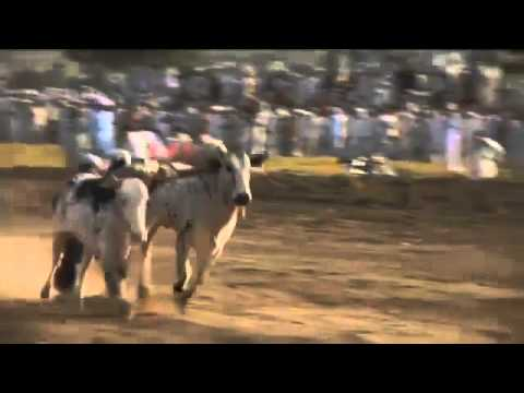 Ox Board Racing In India - Newest Olympic Sport?