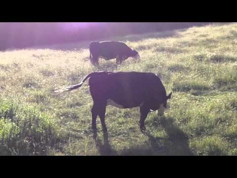 Ep61: Happy Grass Fed Cows & Their Healthy Beef