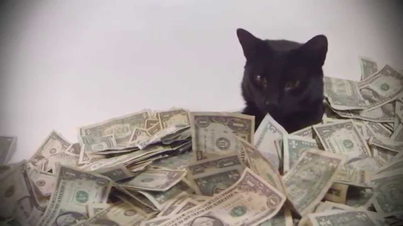 Cats Rolling in Money a Cat Rolling in Cash