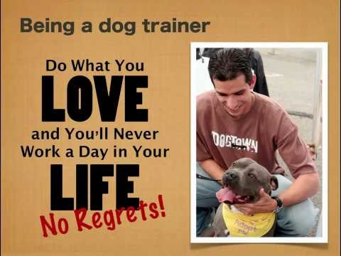 Switching To A Career In Dog Training video