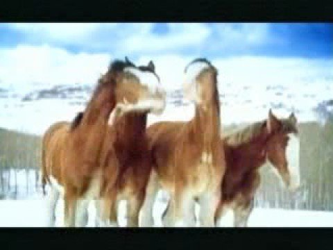 Busweiser Snow Fight between Horses