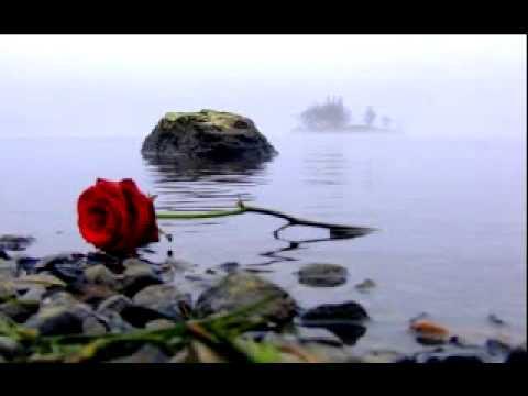 Натиск - Алая роза