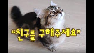 화장실에 갇혀있는 친구를 걱정하는 귀여운고양이동영상