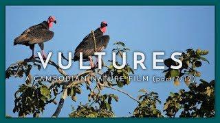A Cambodian Nature Film - (Part 7 / 12)