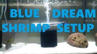 How To: Blue Dream Shrimp Tank