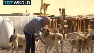 Jordan Stray Dogs: One woman rescues street dogs in Aqaba