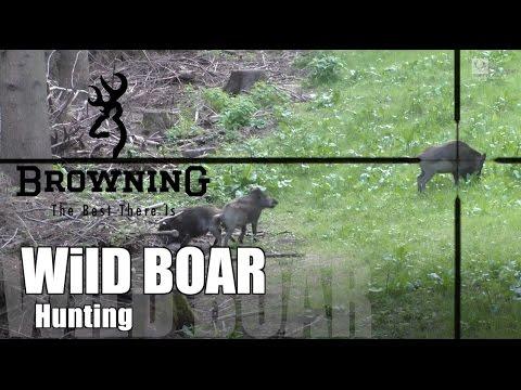 Wild Boar Hunting  Juli 2015/ Saujagd Juli 2015 - video chasse au sanglier