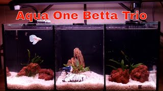 Aqua One Betta Trio Tank set up