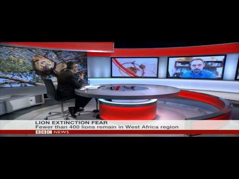BBC World News Interview with Panthera's President on Lions in West Africa
