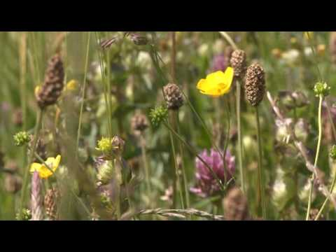 The Calderdale Seeds Project centres around the harvesting of wild flower and grass seeds from donor sites and sowing them on degraded receptor sites in orde...