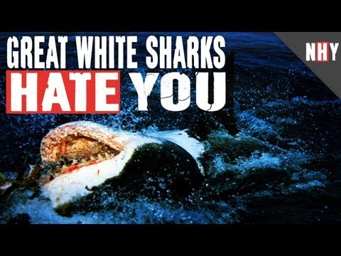 GREAT WHITE SHARKS HATE YOU