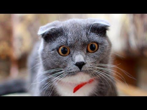 Почему у кошки в темноте глаза светятся
