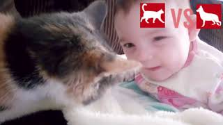 Cutest Cats Compilation 2019/2020 |CATS VS DOGS  | Best Cute Cat Videos Ever
