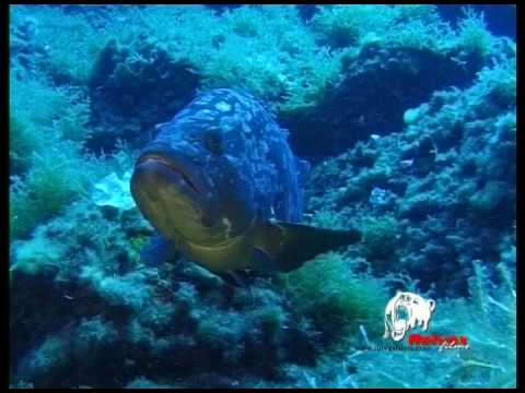 Spearfishing Misteries. Trailer Reivax Films.