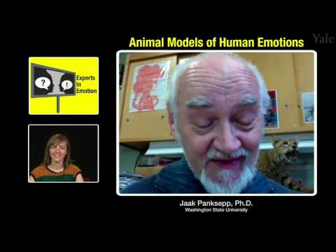 Experts in Emotion 3.3 -- Jaak Panksepp on Animal Models of Human Emotion