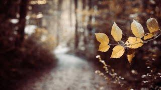 Last Leaf Down - The Path