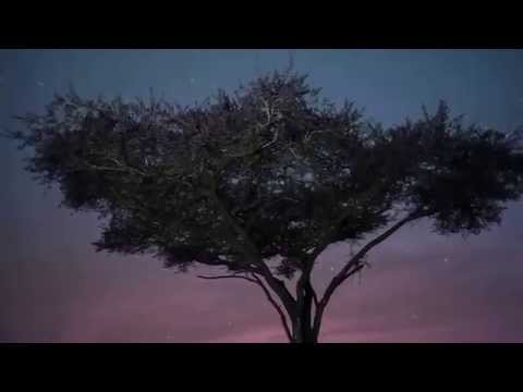RELAXING MUSIC ETHNIC AFRICAN SAVANNAH MUSICA RELAJANTE ETNICA SABANA AFRICANA