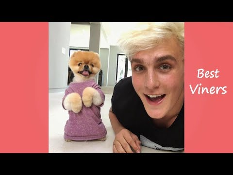 Jake Paul Vine compilation - Funny Jake Paul Vines & Instagram Videos - Best Viners