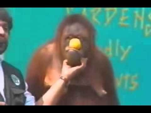Funniest Monkey video