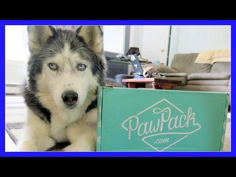 HUSKY STEALS THE ALIEN TOY | PawPack UnBoxing