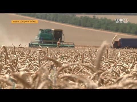 Выращивание пшеницы в ставропольском крае 915