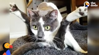 Special Cat Turns Guy Who Hated Cat into The Ultimate Cat Dad - SCOOTER | The Dodo