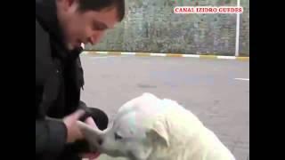 Um cão querido por todos