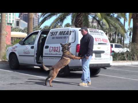 K9 Dog Training - Dog Trainer Fred Hassen video