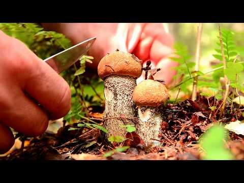 Грибы в лесах Подмосковья  сентябрь 2016