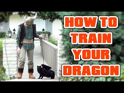 Cat Halloween Costume! How To Train Your Dragon video