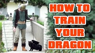 Cat Halloween Costume! HOW TO TRAIN YOUR DRAGON