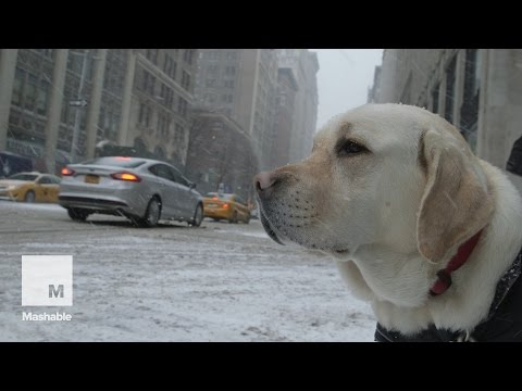 Blizzard of 2015 So Far: New York Isn't Scared | Mashable