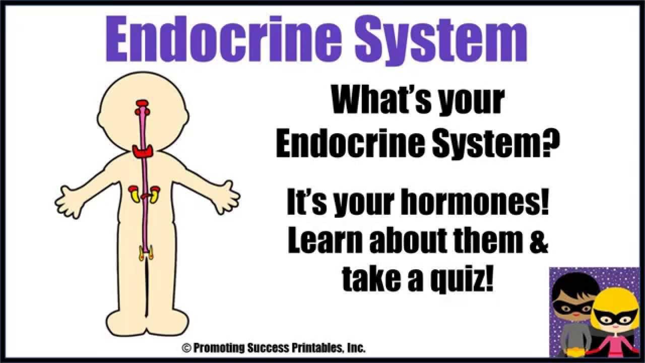 Endocrine system worksheet middle school pdf