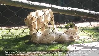 Download 10 More Weird Animal Sex & Mating Habits Strange Animal Behavior: Lion, Dolphin, Panda Documentary 3Gp Mp4