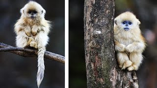 10 Most Beautiful Monkeys In The World