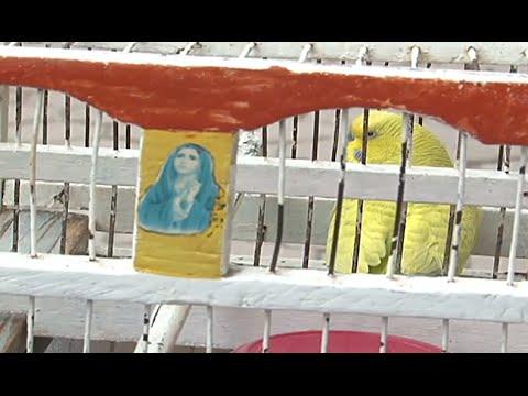 Los pájaros de la suerte, una tradición de las calles de Tuxtla Gutiérrez