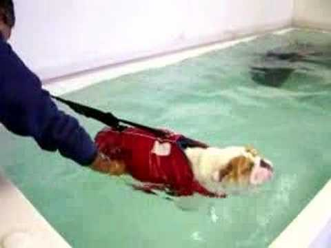 fatassed dawg swimming he he