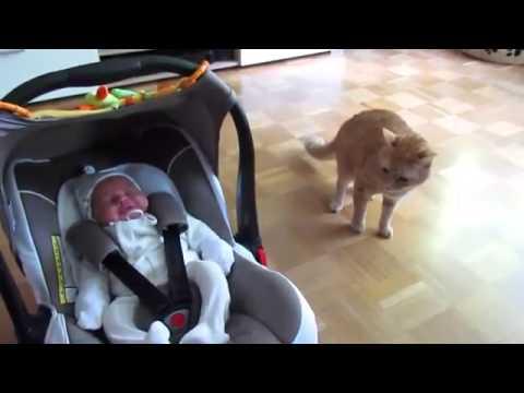 La curiosa reacción de un gato al ver un bebé por primera vez