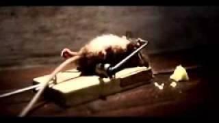 Raton haciendo ejercicio
