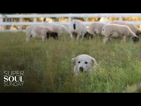 Steep Your Soul: The Watchful Guardians of Apricot Lane Farms - Super Soul Sunday - OWN